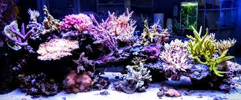 led lights for coral tanks led lighting archives acrooptics
