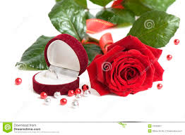 beautiful red rose for day valentine as gift stock photos image