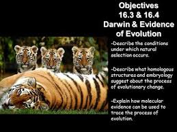 darwin u0027s theory of evolution ppt video online download
