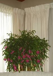 233 best house plants images on pinterest house plants indoor