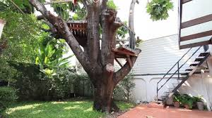 Real Treehouse Tree House And Swimming Pool In Bangkok Home For Rent Youtube