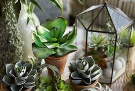 Flower Shop Troy Mi - november 15 succulent workshop with pottery barn colonial