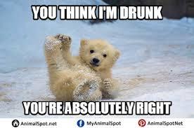 Meme Bear - polar bear memes