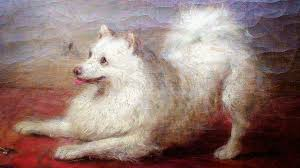 american eskimo dog male painting of an american eskimo spitz dog by george augustus baker