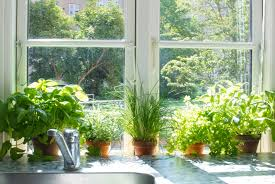 garden increasing the design composition by growing herbs indoor