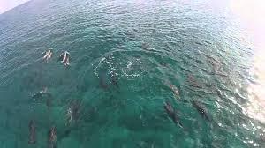 surf u0027s up at six senses laamu youtube
