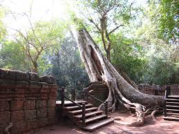 photos from ta prohm temple at angkor wat