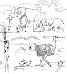 elephant bath coloring kids coloring
