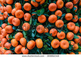 New Year Fruit Decorations by Closeup Full Frame View Bright Red Stock Photo 369862349
