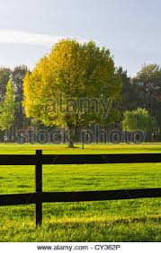 wooden fence and green grass yard stock photo royalty free image