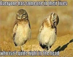 Funny Owl Meme - funny owl meme