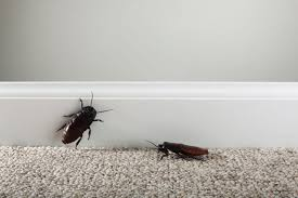 Small Bugs In Bathroom How To Control And Identify Bugs That Eat Clothes