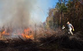 Wildfire Eternal Gatherer by World Wide Matel Forestry Ecology Archives