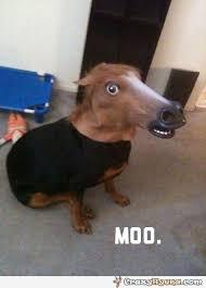 Meme Horse Head - funny horse mask meme
