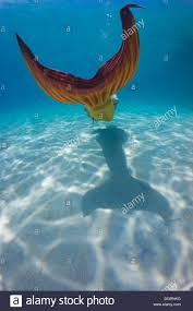 mermaid wearing a mermaid costume swimming in the shallow