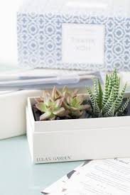 easy care indoor succulent garden succulents and sunshine