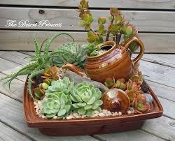 101 best succulent and cactus garden ideas images on pinterest