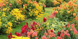 autumn flowers 25 best fall flowers plants flowers that bloom in autumn