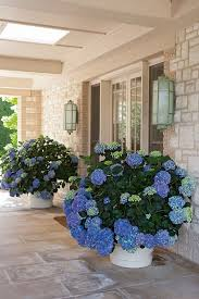 Flowering Patio Plants Charming Porch Designs That Inspire Easy Summer Living Hydrangea