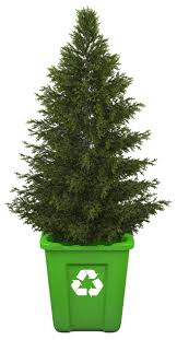 christmas tree recycling dacorum