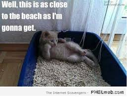 Meme Kitty - 42 kitty litter beach funny cat meme pmslweb
