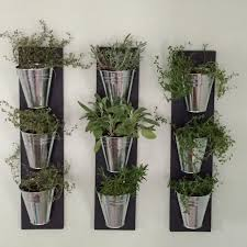Wall Plant Holders Best 25 Herb Wall Ideas On Pinterest Kitchen Herbs Indoor