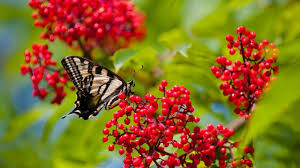 butterfly wallpapers free download 52 wallpapers u2013 adorable