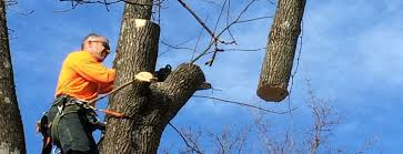tree removal service from lodema tree service