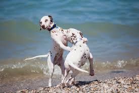 bagno per cani anzio spiagge libere qui gli animali da compagnia hanno accesso