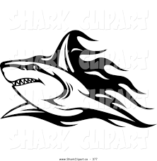 royalty free black and white stock shark designs