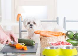 5 common mistakes when feeding raw food diets to pets raw dog