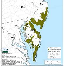 map of maryland delaware and new jersey american black duck habitat restoration effort nrcs delaware