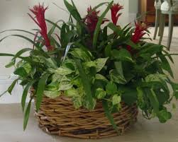 Plants To Grow Indoors 365 U2013 Healthy Days Best Plants To Grow Indoors Without Sunlight