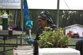 native plant nursery first nations industry work to rejuvenate the land