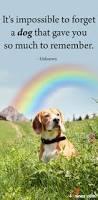 best 25 dog paws ideas on pinterest pawprint ornament dog paw