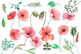 watercolor poppy flowers clipart by chi design bundles