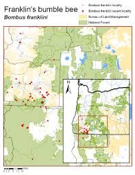 Oregon Blm Maps by The Xerces Society Bumble Bees Franklin U0027s Bumble Bee Bombus