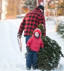 Cutting Christmas Tree - make a family tradition of cutting down your own christmas tree