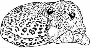 great cheetah coloring page alphabrainsz net