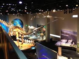 tour of perot museum of nature and science