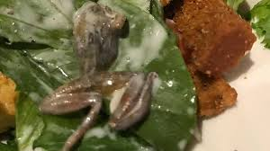 woman finds frog in salad at bj u0027s restaurant in west covina says