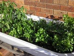 growing vegetables in containers how to set up a container