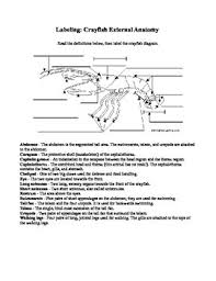 this crayfish or crawfish labeling worksheet is great practice