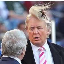 Donald Trump Meme - donald trump memes google search trump pinterest meme and memes