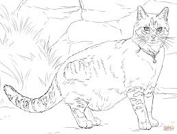 cat with bell coloring page free printable coloring pages
