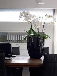 office plant interior office plants and flower displays with eco office plants