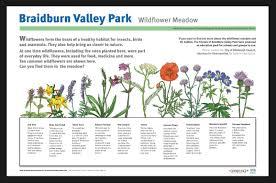 Identify Flowers - photos u003e u003e wild flower meadow braidburn valley park edinburgh