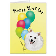 american eskimo dog calendar american eskimo dog birthday cards zazzle