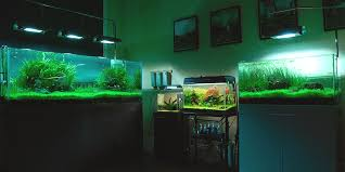 Aquascape Shop Aquascaping In L A Resources For Underwater Gardeners L A At