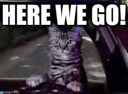 Here We Go Meme - here we go toonces the driving cat meme on memegen